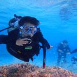 コースのご案内 体験ダイビング